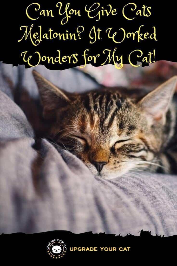 Can You Give Cats Melatonin