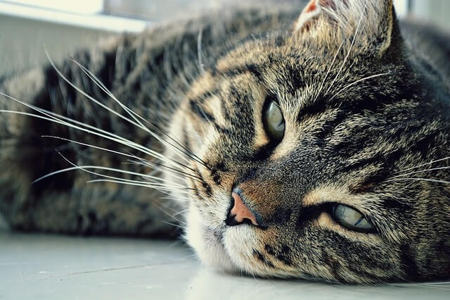Cats sleep in doorways to get your attention