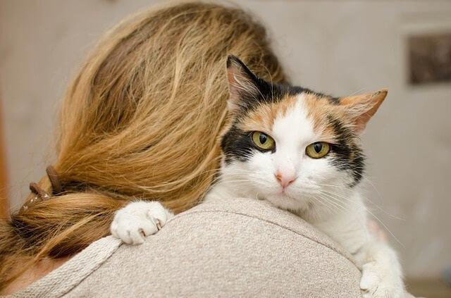 How to Stop Your Cat Sleeping in Your Doorways