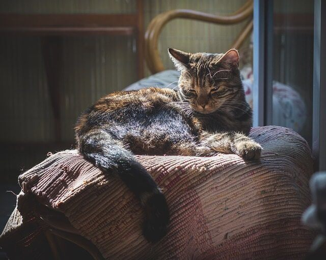Is Melatonin Dangerous to Cats