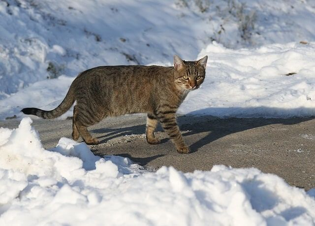Where do feral cats hide or go when it is snowing