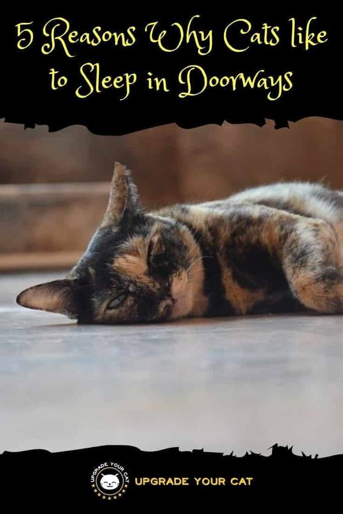 Why Does My Cat Sleep in the Doorway