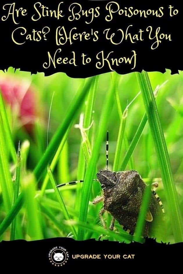 Are Stink Bugs Poisonous to Cats or Dangerous