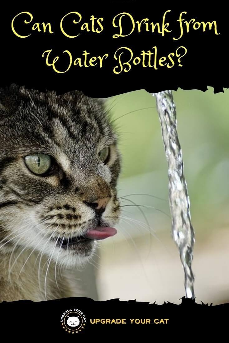 Can Cats Drink from Water Bottles