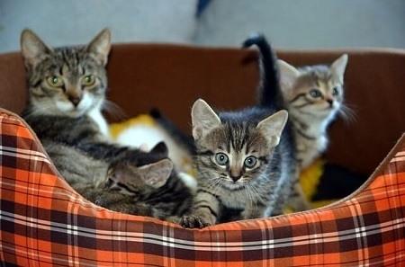Can Newborn Kittens Hear