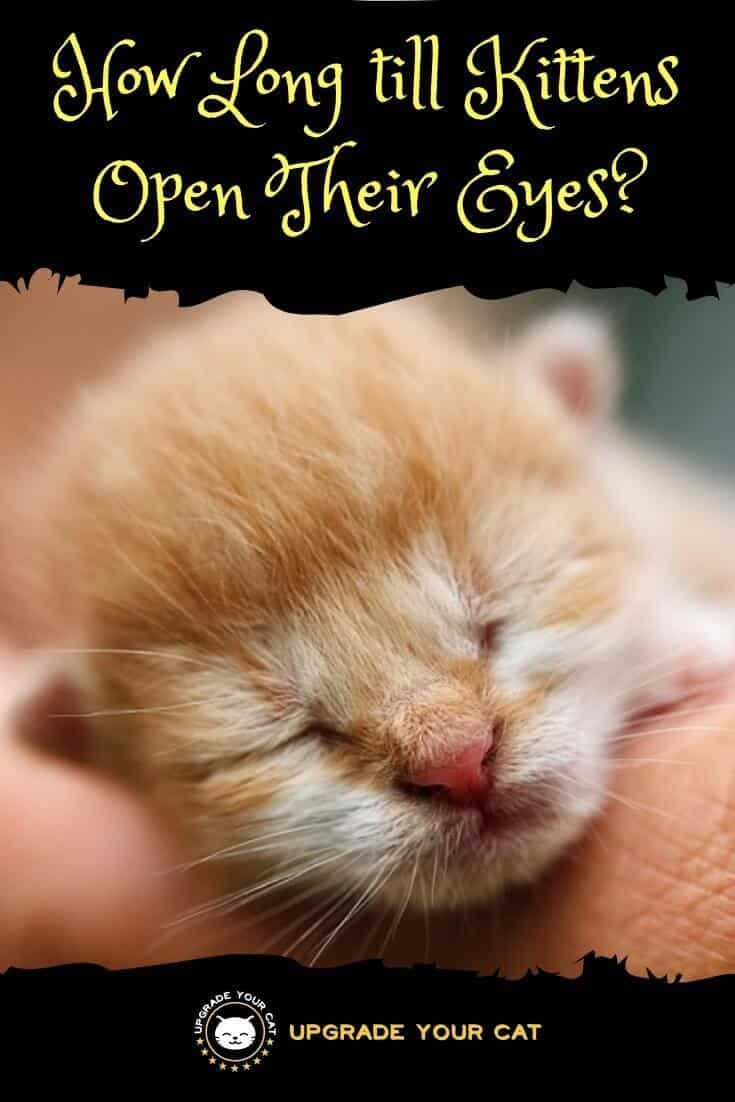 How Long till Kittens Open Their Eyes