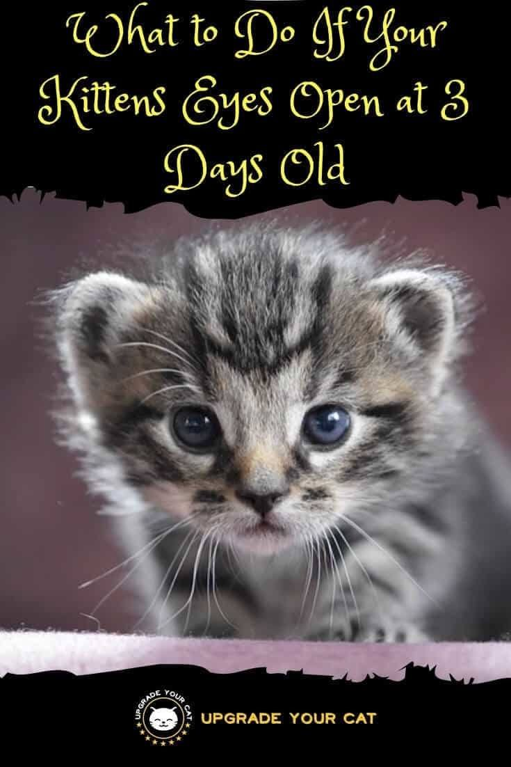 16 Day Old Kittens Have An Eye Sealed Shut Thecatsite