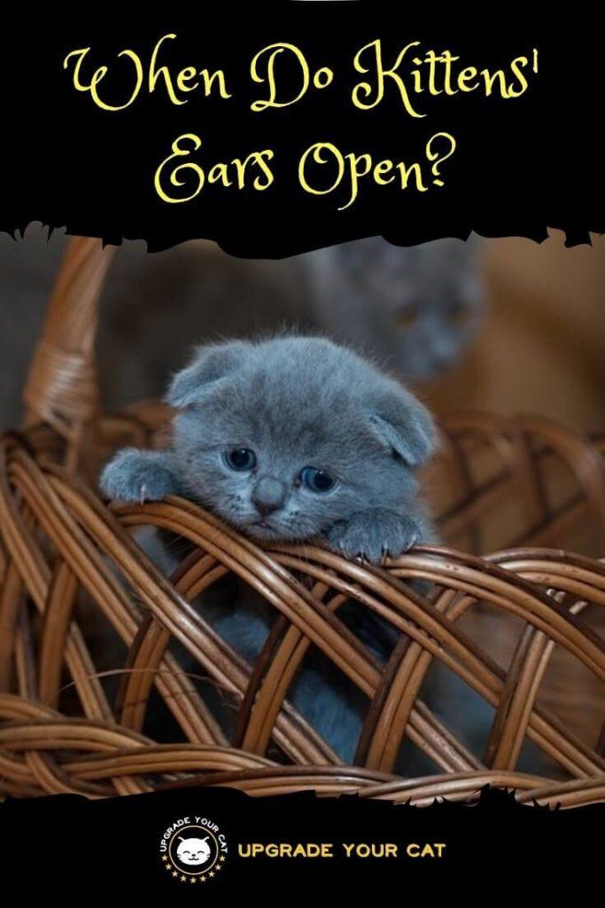 When Do Kittens Ears Open