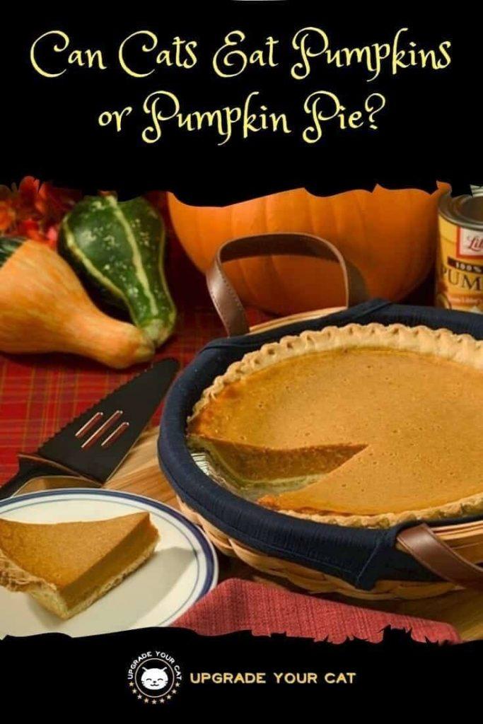 Can Cats Eat Pumpkin Pie