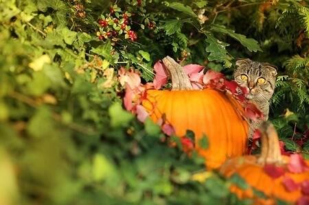 Can Cats Eat Raw Pumpkin