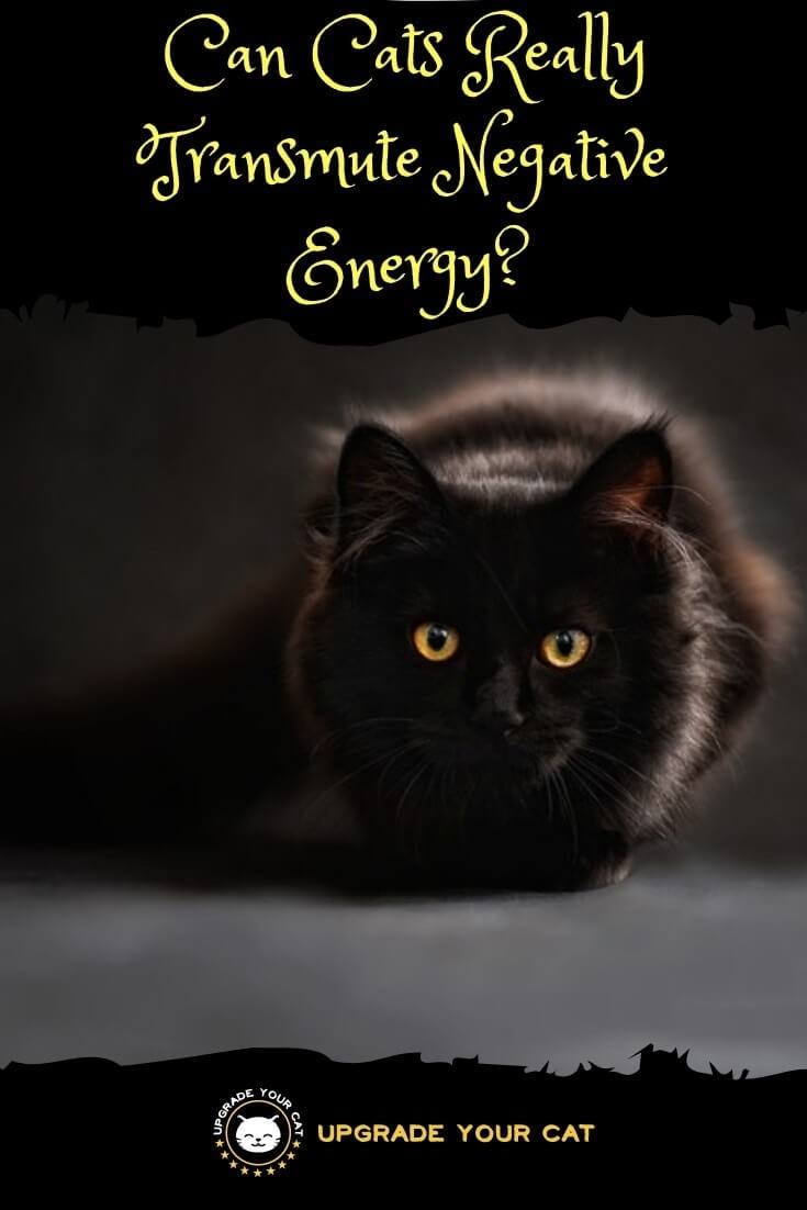 Can Cats Transmute Negative Energy