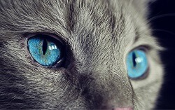 Cat Senses Exceptional Eyesight