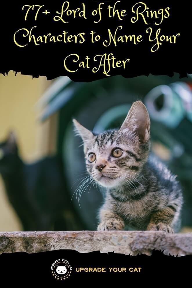 Lord of the Rings Cat Names Characters