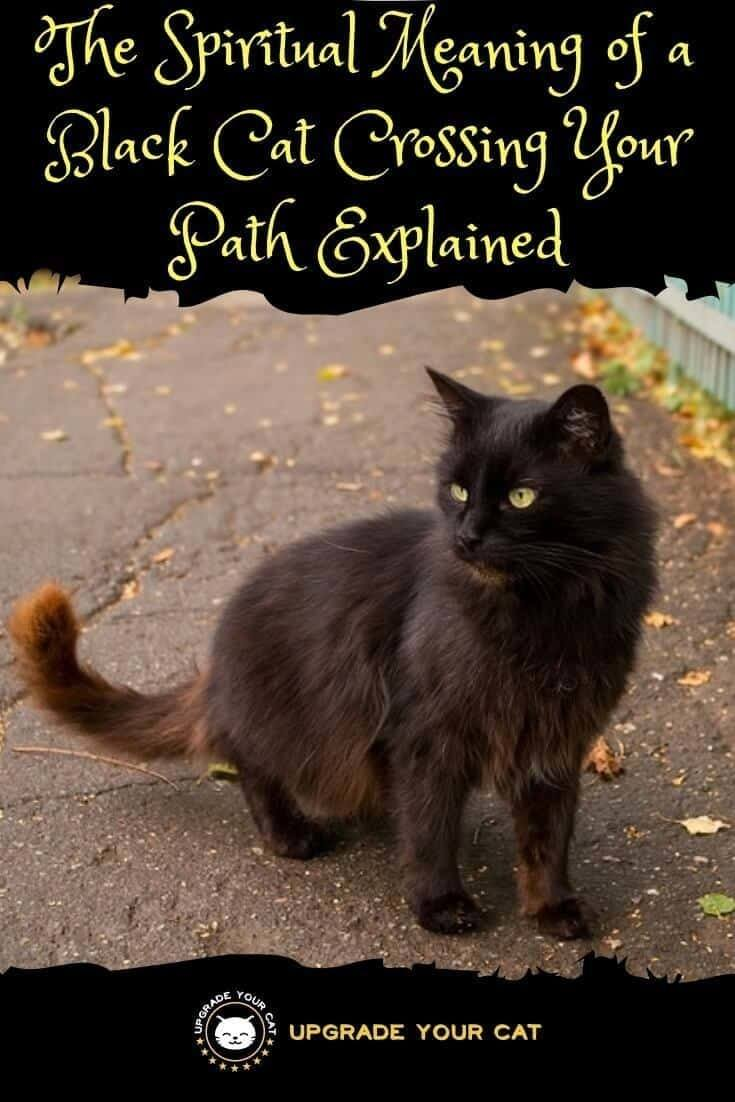Spiritual Meaning of Black Cat Crossing Your Path Good or Bad Luck