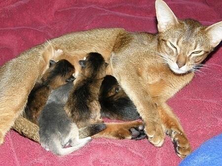 cat mother moving her kittens often
