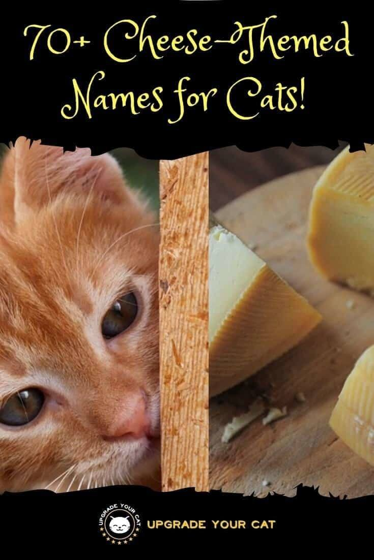 Cheese Names for Cats