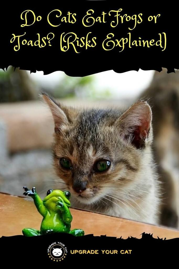 Do Cats Eat Frogs or Toads