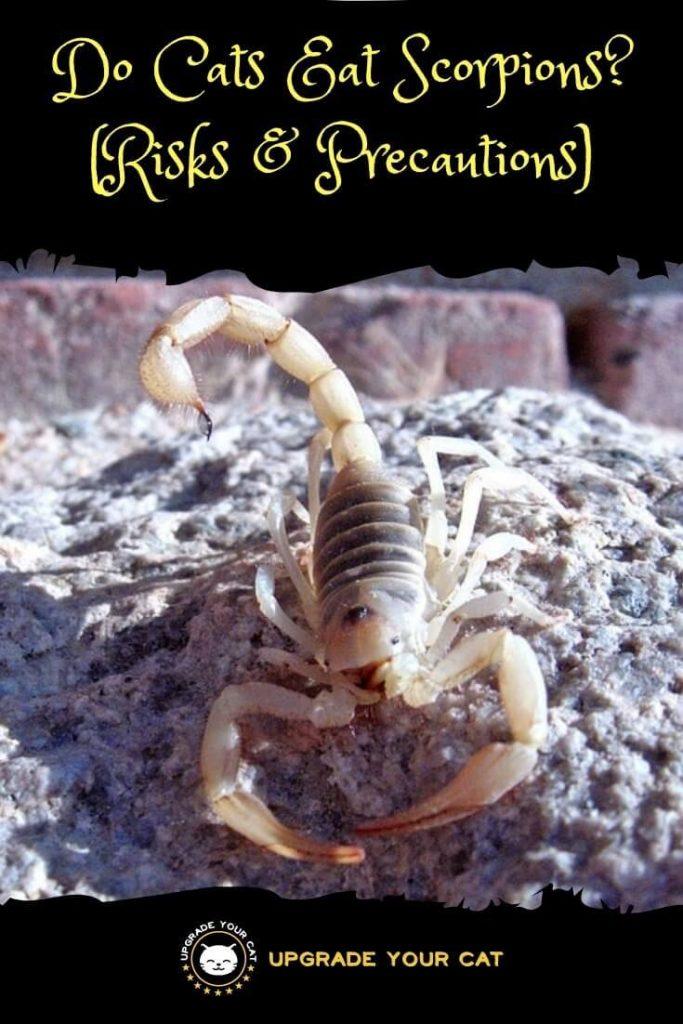 Do Cats Eat Scorpions