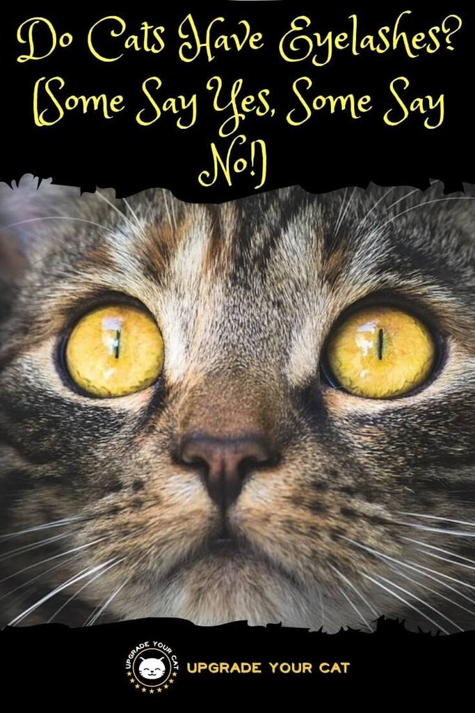 Do Cats Have Eyelashes