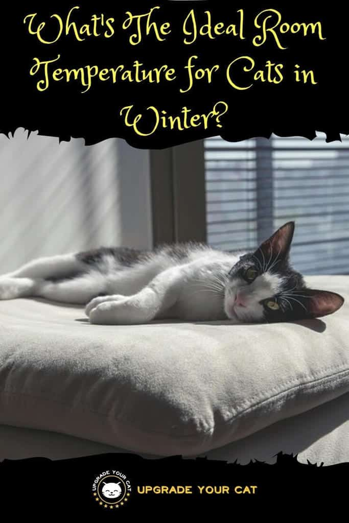 Ideal Room Temperature for Cats in Winter