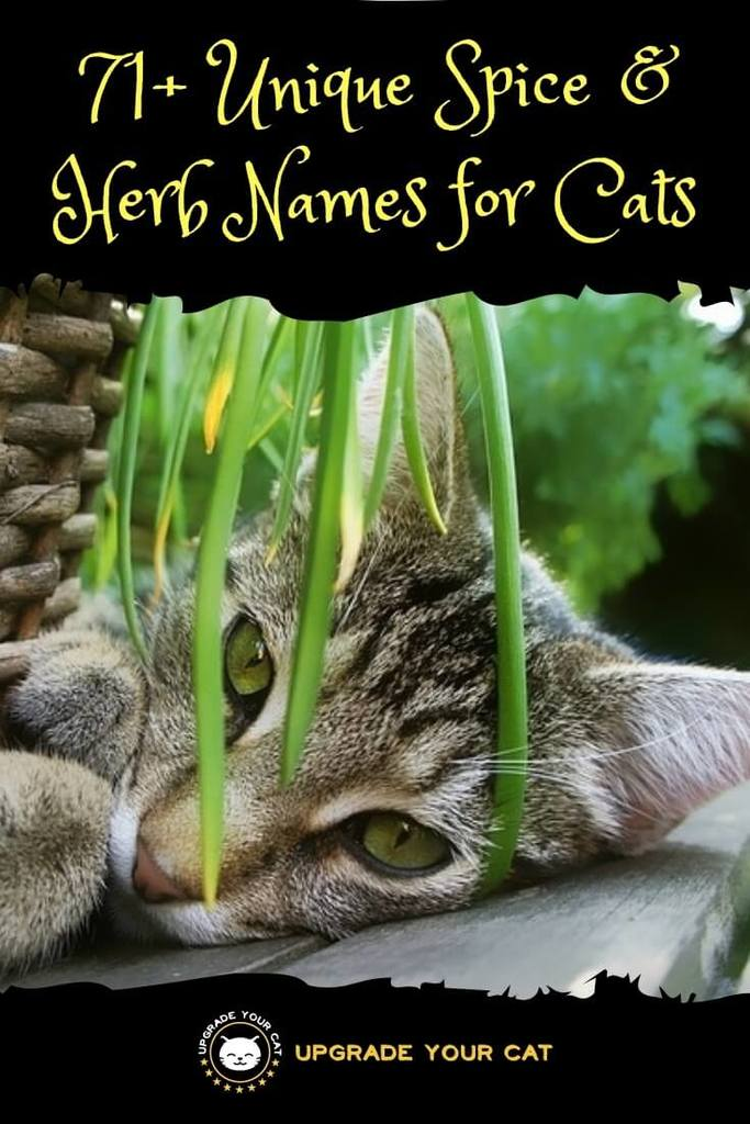 Spice and Herb Cat Names