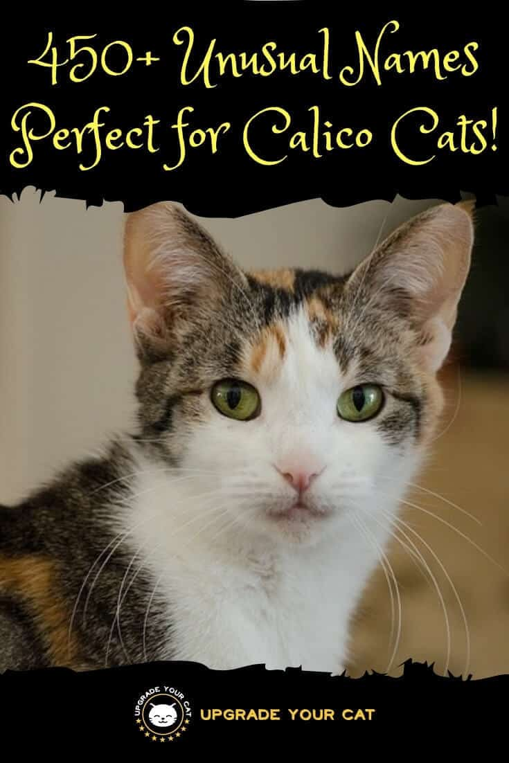 Unusual Calico Cat Names