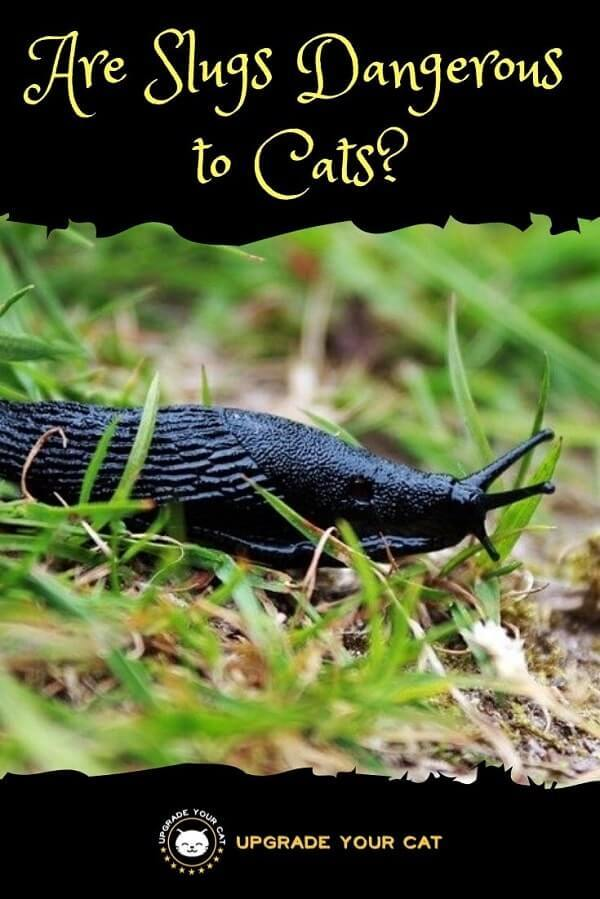 Are Slugs Dangerous to Cats