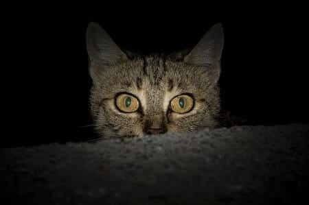 Cats Are Active at Night and May Attack You