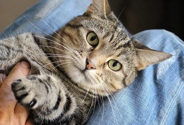 Cats Bite When They Are Being Over-Stimulated
