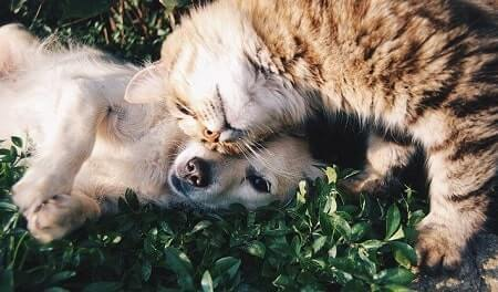 Cats Look Feminine Dogs Look Masculine