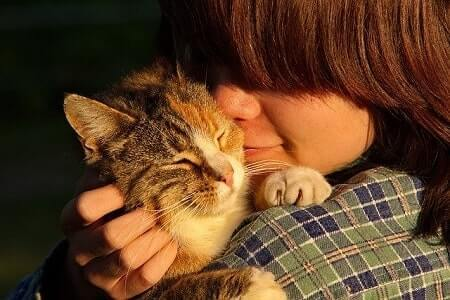 Reasons Why Cats Nibble Lick and Bite Noses