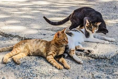 What is the Difference Between Stray and Feral Cats
