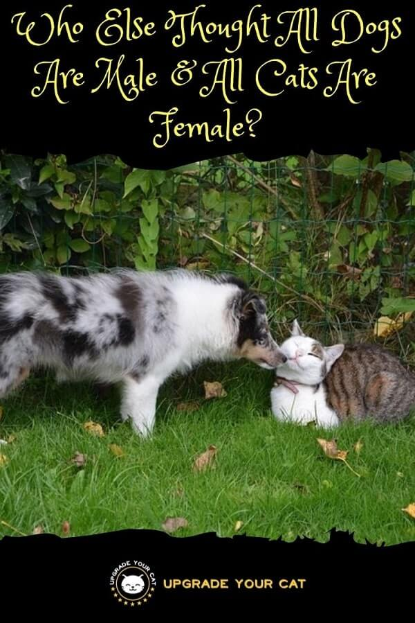 Who Else Thought All Dogs Are Male All Cats Are Female