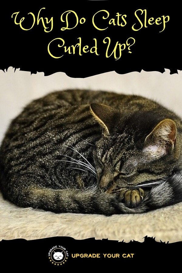 Why‌ ‌Do‌ ‌Cats‌ ‌Sleep‌ ‌Curled‌ ‌Up