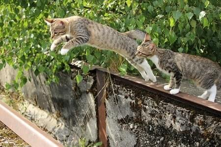 Why Do Cats Trill When They Jump