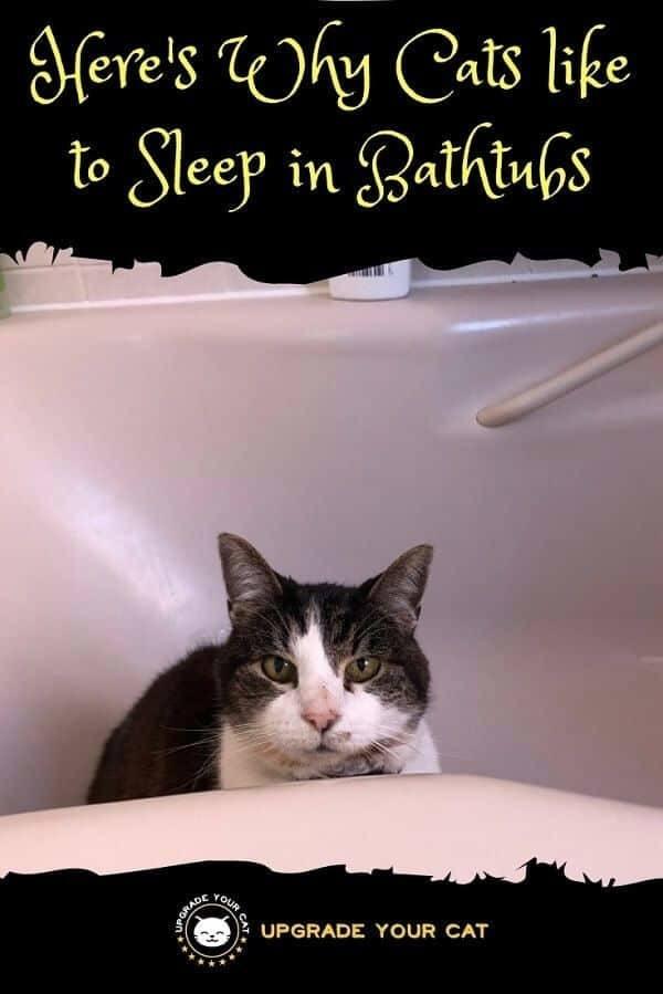 Why Does My Cat Sleep in the Bathtub