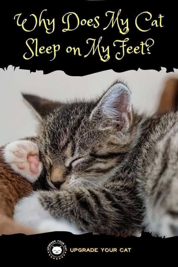 Why Does My Cat Sleep on My Feet