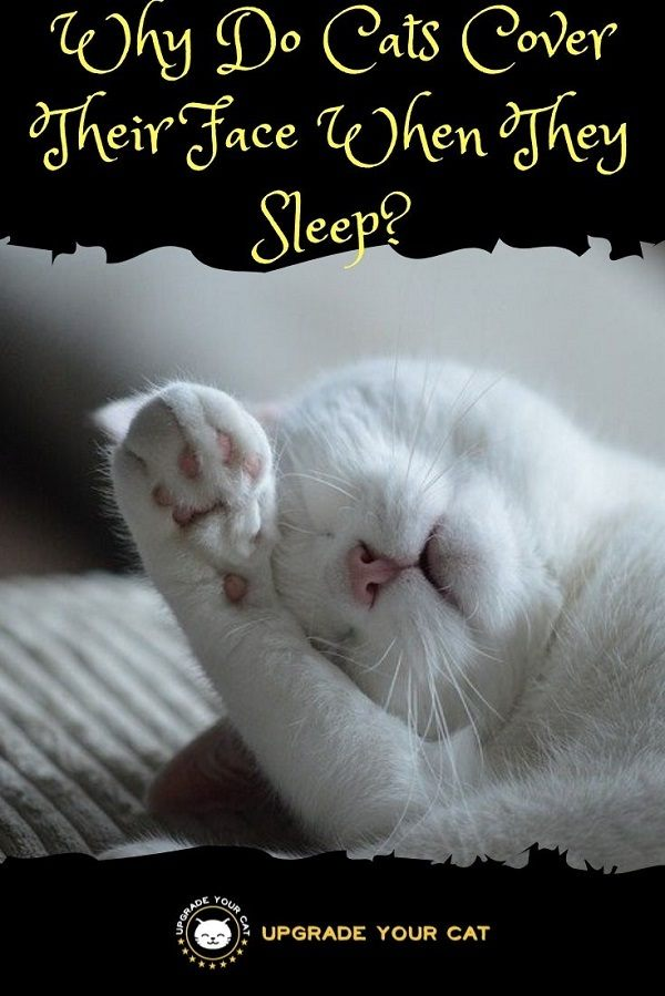 Why Do Cats Cover Their Face When They Sleep