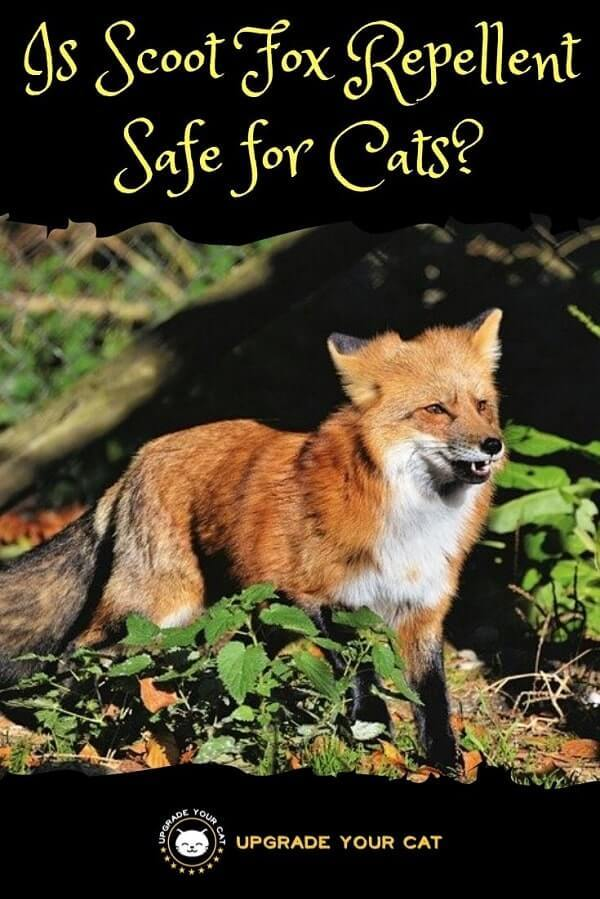 Is Scoot Fox Repellent Safe for Cats