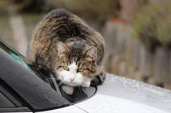 Use motion sensors to keep cats off your car