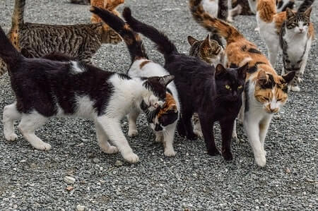 Dry and Wet Cat Food Brands for Feral Cats