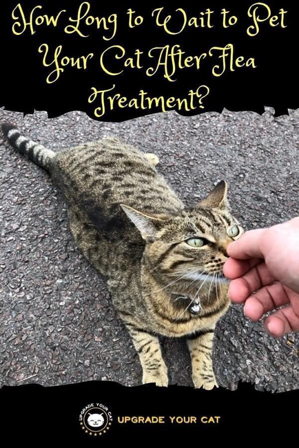 How Long After Flea Treatment Can I Pet My Cat