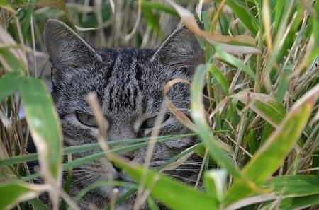 Some of the Plants That Are Toxic to Cats