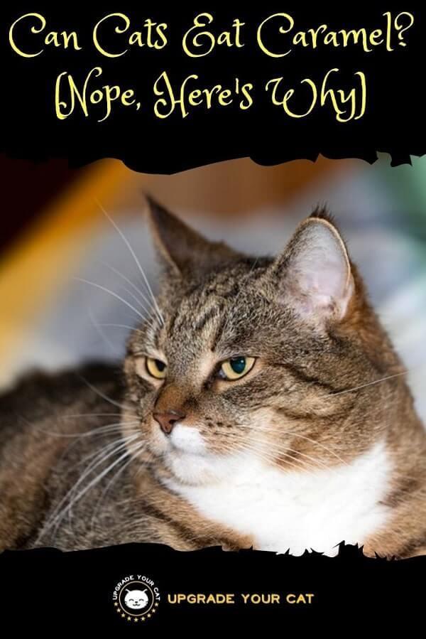 Can Cats Eat Caramel