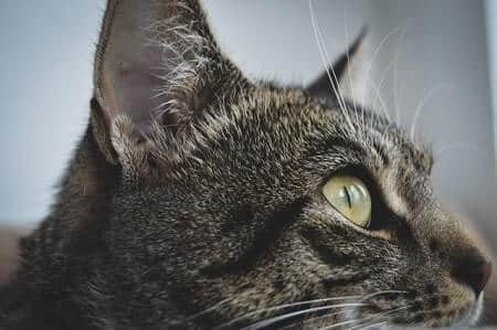 Cats eyes Narrow Slit Pupils