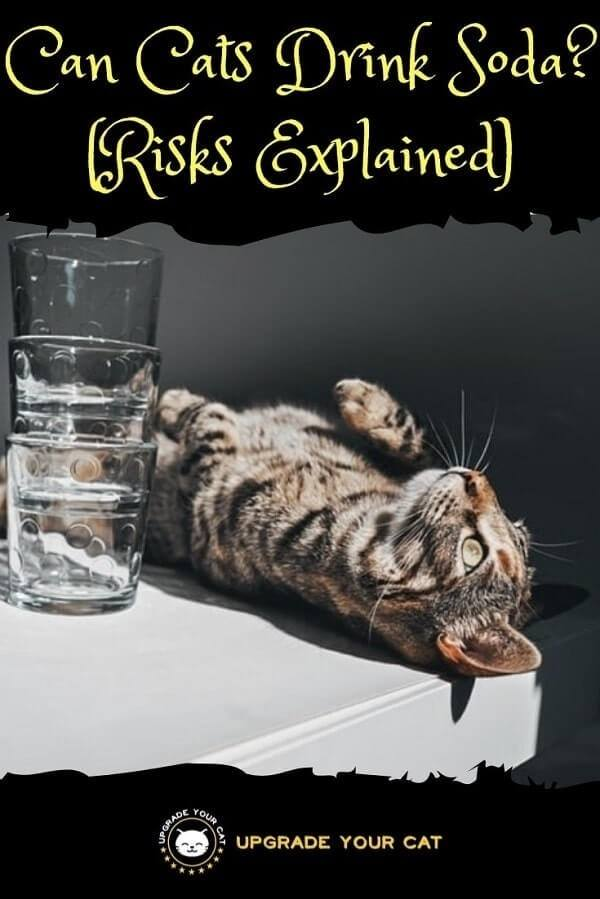 Can Cats Drink Soda