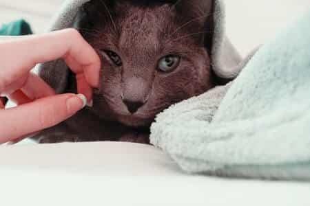 Can I Use Any Shampoo on My Cat