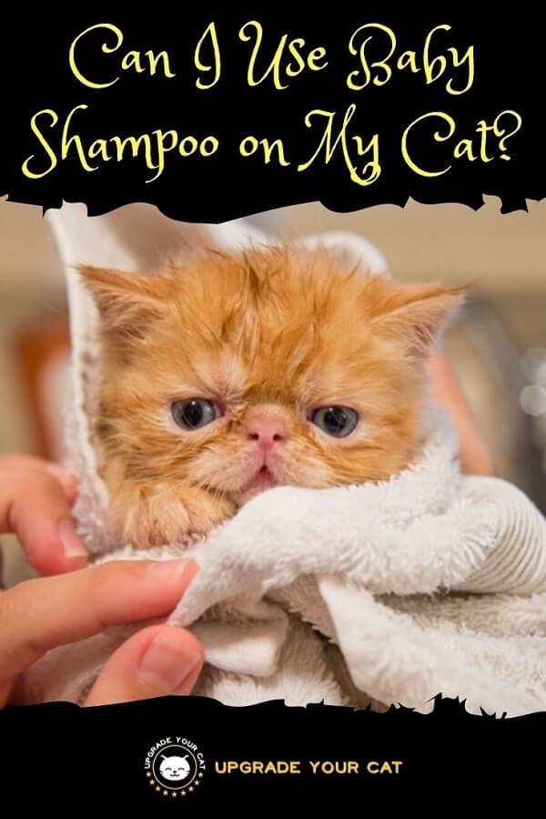 Can I Use Baby Shampoo on My Cat