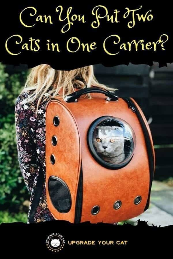 Can You Put Two Cats in One Carrier