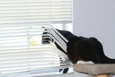 Cats Are Trying to Get Your Attention by Pawing at the Window